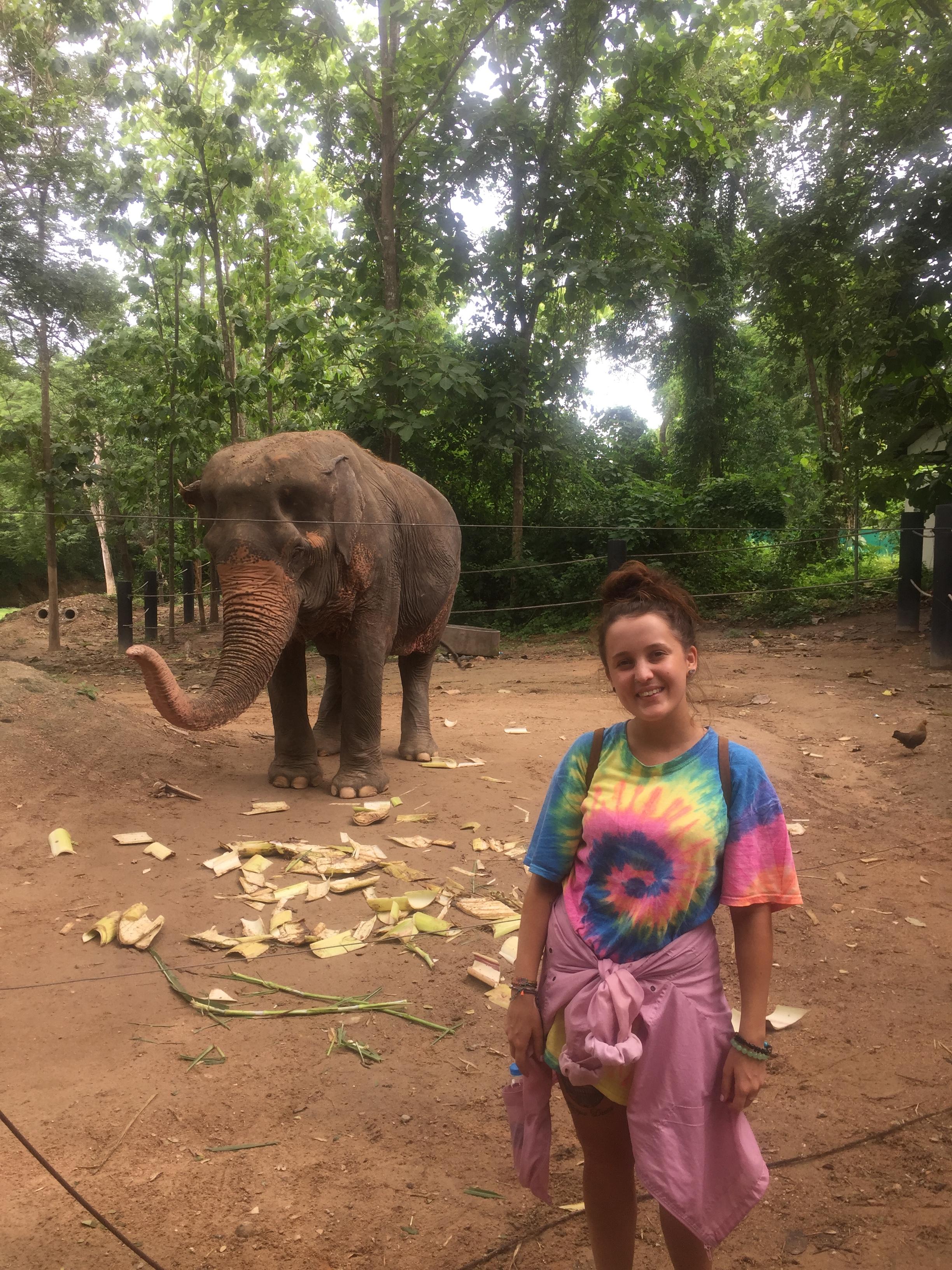 feeding elephant.JPG