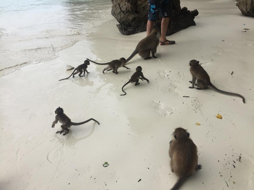 lots of monkeys