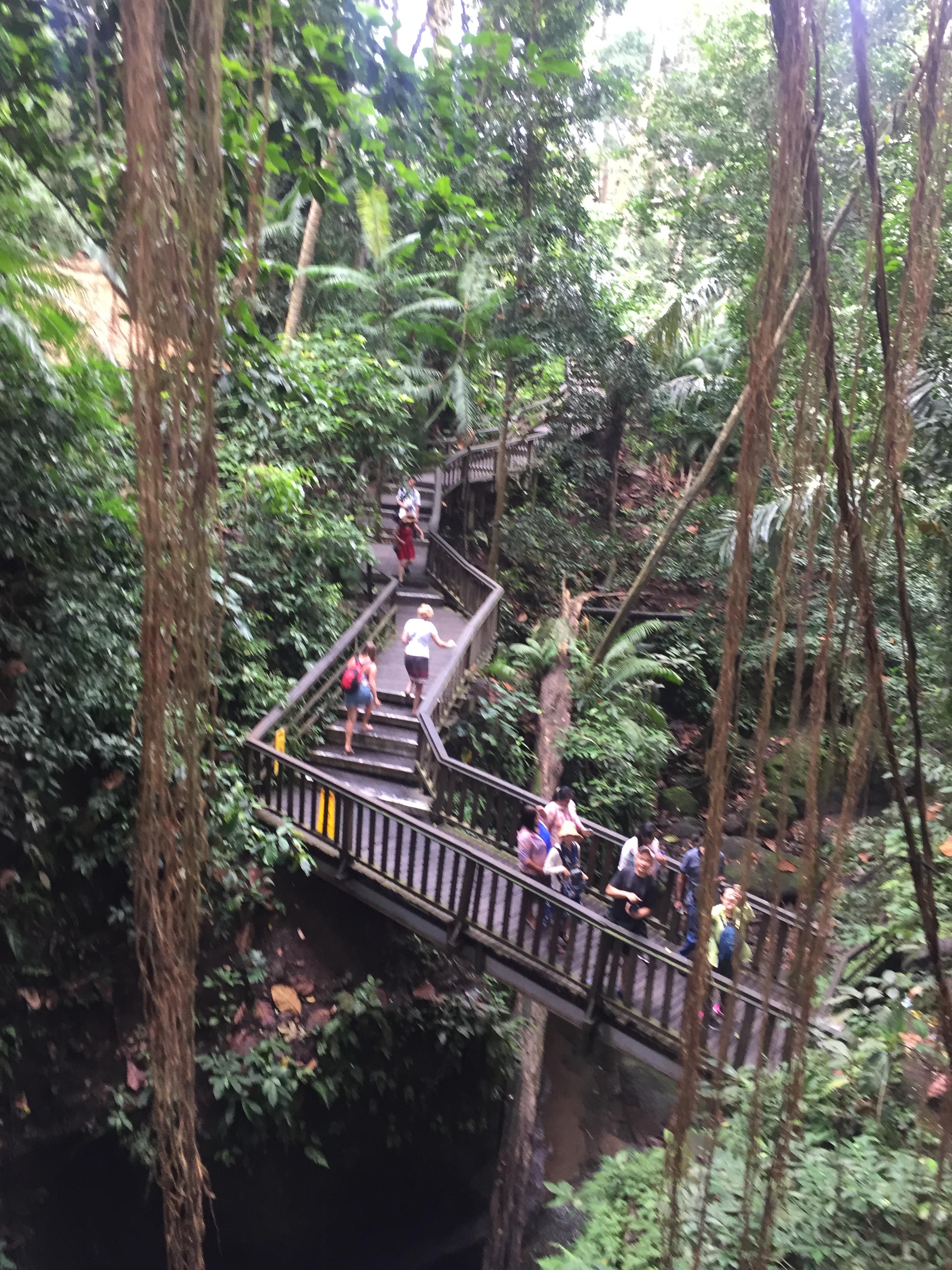 monkey bridge.JPG